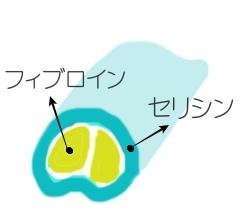 シルク繊維の拡大図